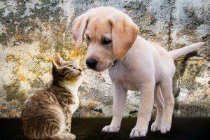 Hund und Katze - sicher im Haus