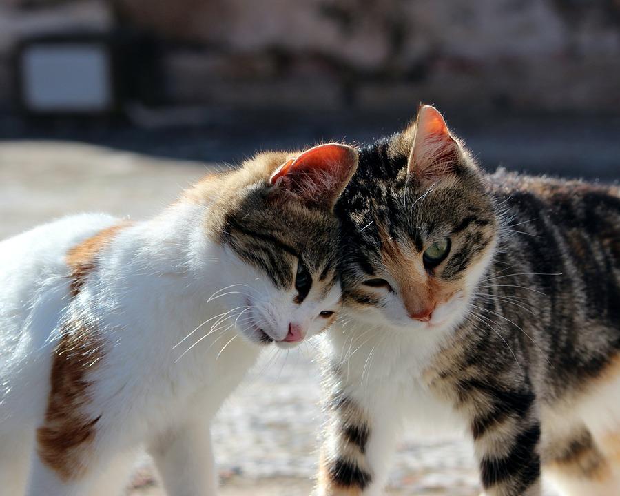 Katzen Allergie